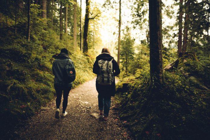 wandelen in een bos