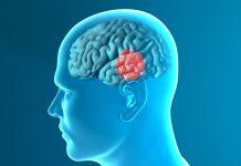 plek in de hersenen